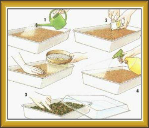 Как и когда сажать землянику семенами
