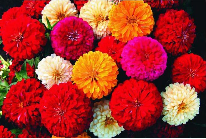 Дизайн дачного участка с цветами фото