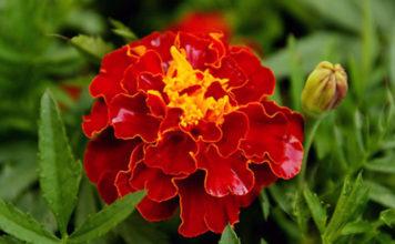 Растения помощники