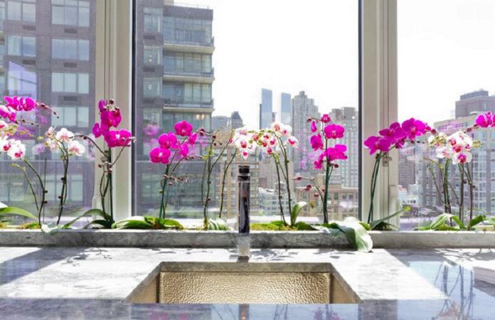 Как размножать орхидею фаленопсис