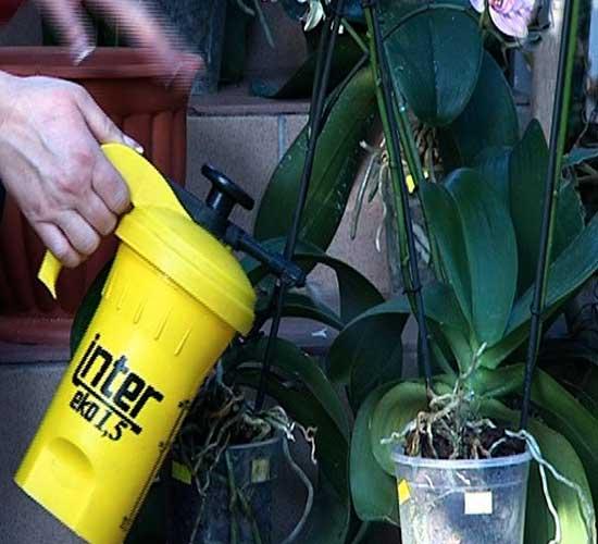 Как поливать орхидею во время цветения, зимой и летом