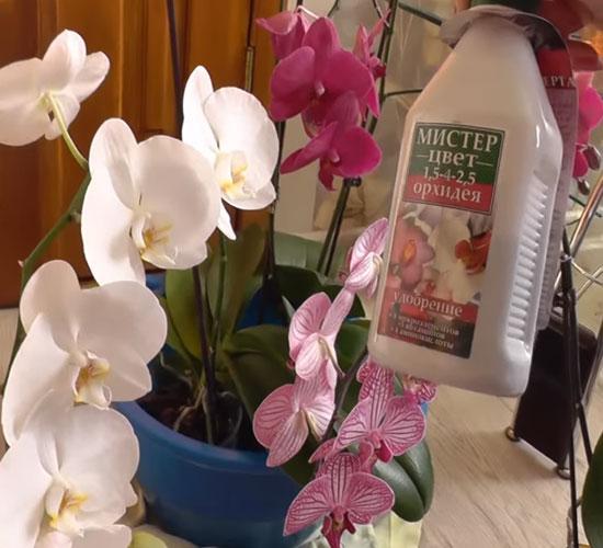 Подкормка орхидей в домашних условиях
